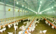 Bird flu outbreak in India and how serious it is to humans